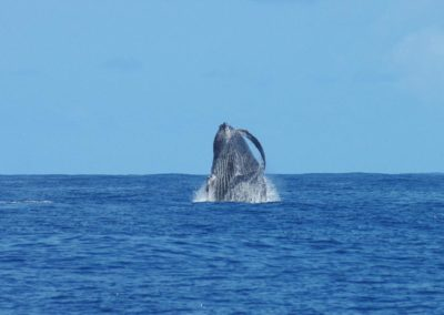croisiere mayotte alamandas boat observation baleines
