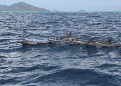 catamaran-mayotte-promenade-en-mer-dauphins-galerie3