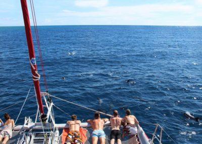 Sortie en mer en catamaran à Mayotte avec les dauphins