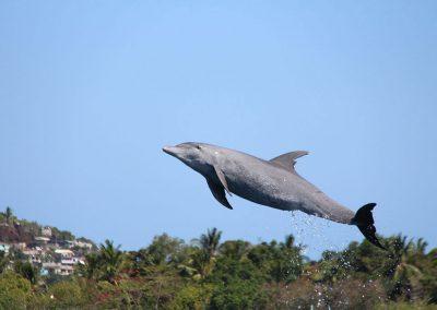 catamaran-mayotte-eole1er-dauphin